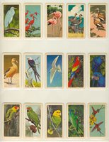 "1960's Brooke Bond Canada Ltd F450-5 Series 6 Tropical Birds U S A Made Lot 35/48 """"1960's Brooke Bond Canada Ltd F450-5 Series 6 Tropical Birds U S A Made Lot 35/48 """""